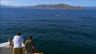 Last Chance To See - Blue Whale Spotting - BBC Two