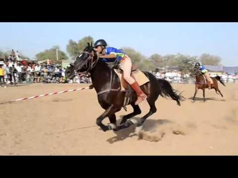 Mega Ashwa show tent pegging riding   2017 टेंट पेगिंग