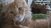 Объявления о продаже кошек и котят в белгороде на avito.