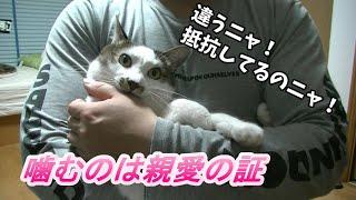 噛み猫と飼主の愛情の深さを証明しようとした結果