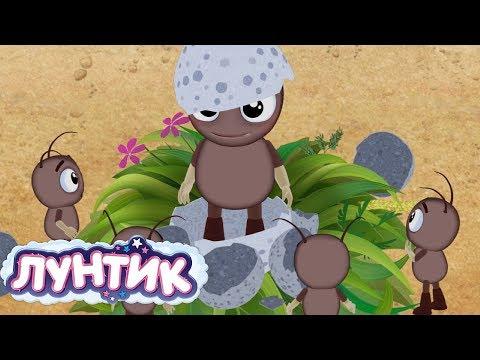 Лунтик | История малышей 🍼 Сборник мультфильмов для детей