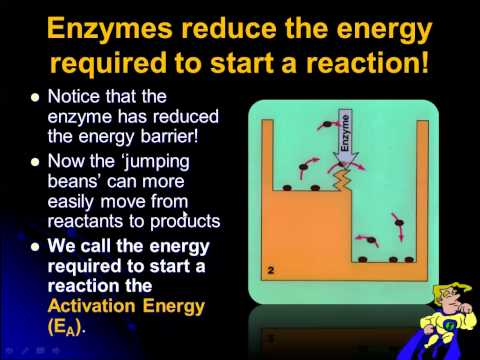 ib biology enzymes ia If you are watching this video now, you seem serious about boosting your ib grade good news: we can help you with that if you are a student from hk, you can register for a free trial lesson with.