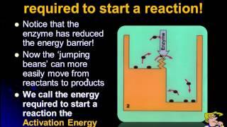Enzymes Introduction IB Biology | Alex Lee