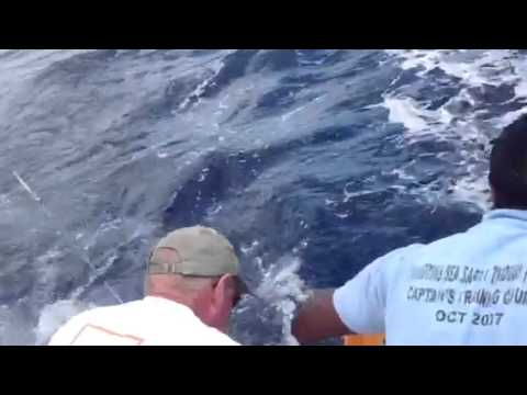 Yellow Fin Tuna Grenada