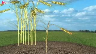 Gift auf dem Acker - Monsanto Roundup (3sat)