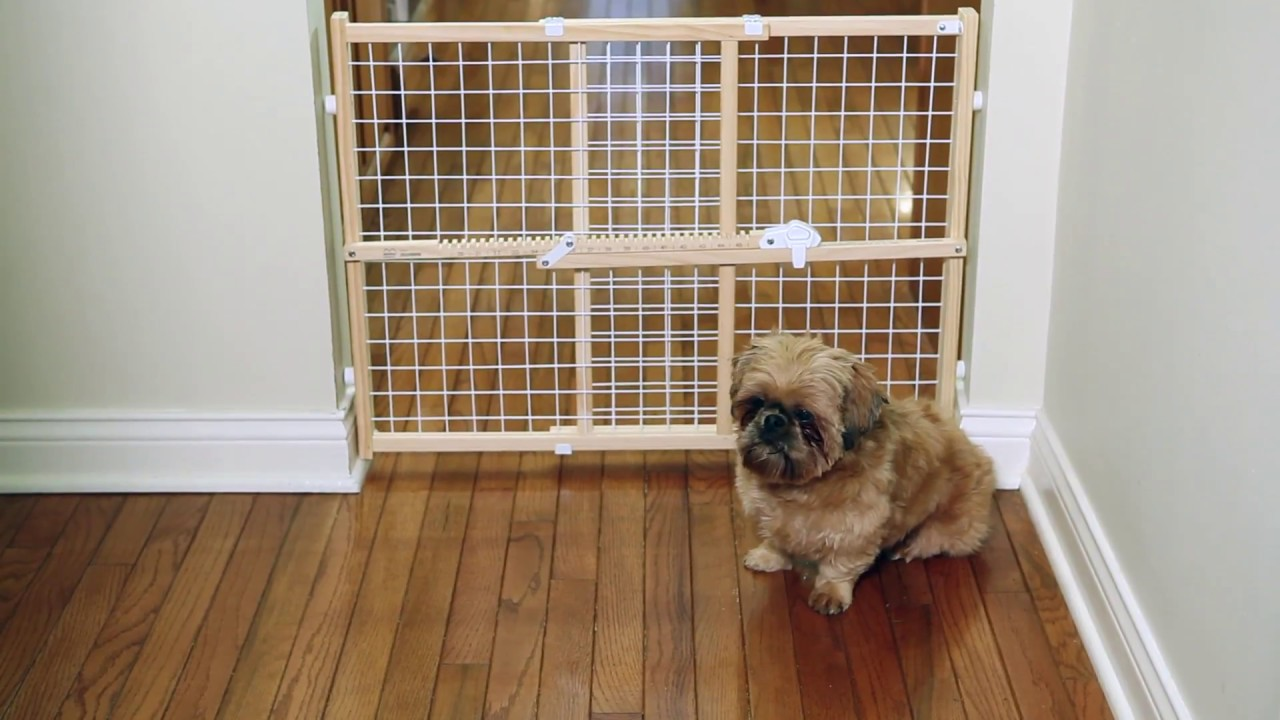 Wood Pet Gates from MidWest Homes for Pets - YouTube