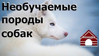 Породы собак которые не поддаются дрессировке / Breeds of dogs that can not be trained