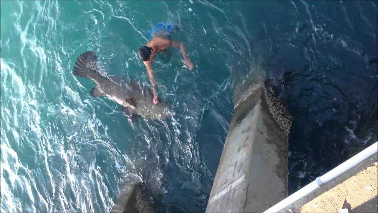 Sebastian inlet enormous goliath grouper 20120505 youtube for Vero beach fishing report