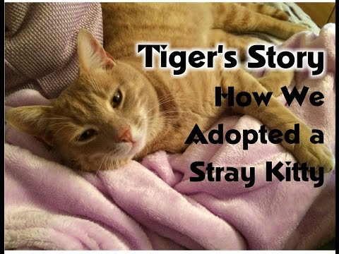 Adopting a Stray Cat: Tiger's Story