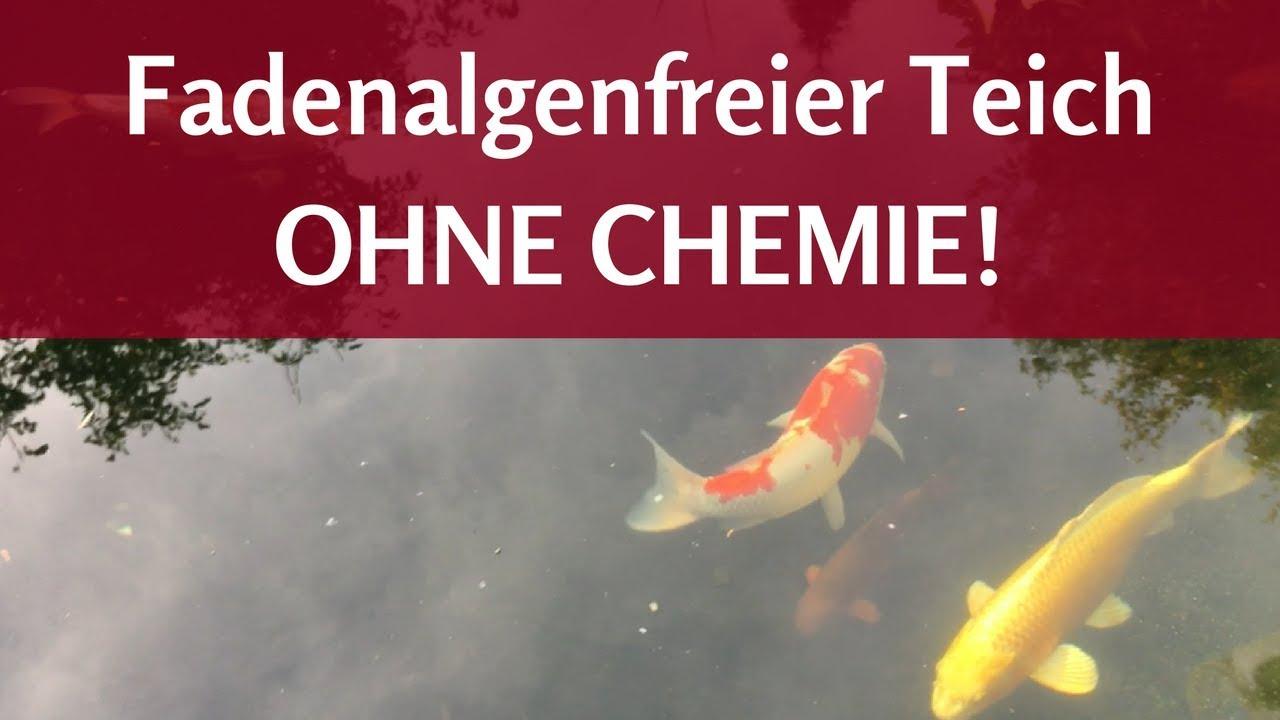 Biologische Teichpflege Im Winter Fadenalgenfreier Teich Ohne