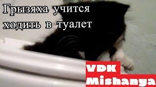 Кошка Пушинка младшая учится ходить в туалет