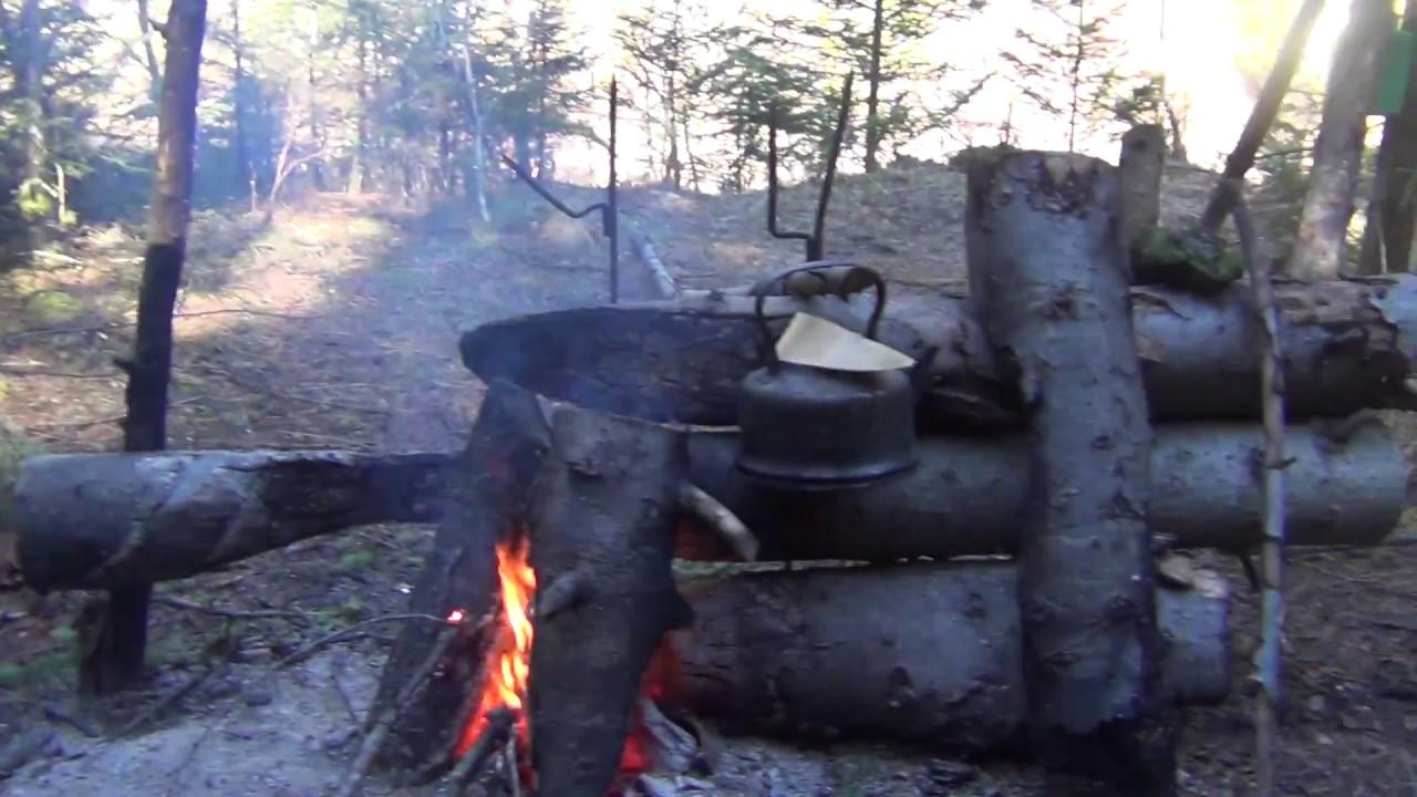 как отпугнуть медведя в лесу