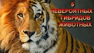 5 НЕВЕРОЯТНЫХ ГИБРИДОВ ЖИВОТНЫХ/5 INCREDIBLE ANIMAL HYBRIDS