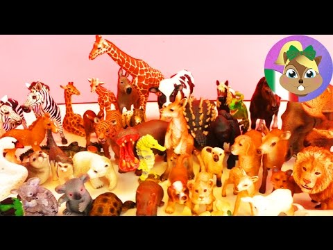 Schleich video u riassunto degli animali della schleich zoo