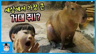 세상에서 가장 큰 거대 쥐 만나다!? 주렁주렁 (귀여움주의ㅋ) ♡ 꿀잼 밀착중계 일상 하남 애니멀 테마파크 놀이 1탄 kids pet | 말이야와친구들 MariAndFriends