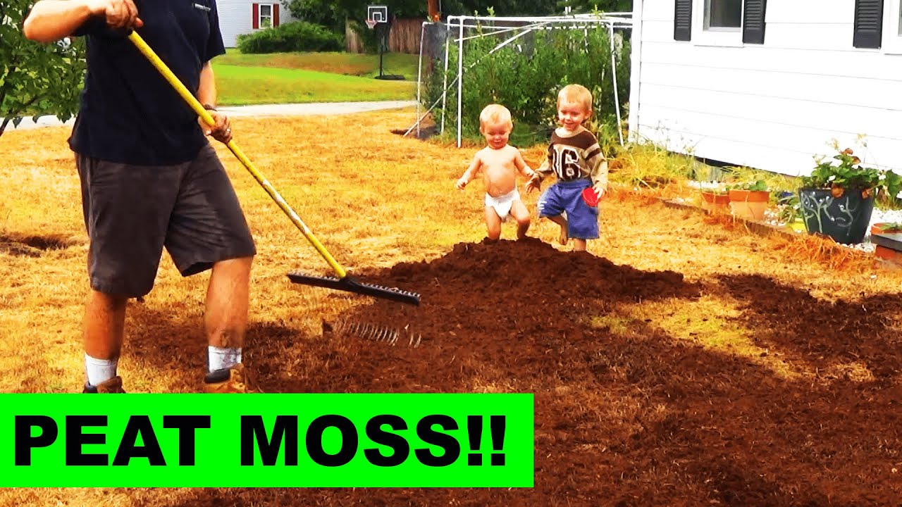 top dressing your grass seed with peat moss youtube