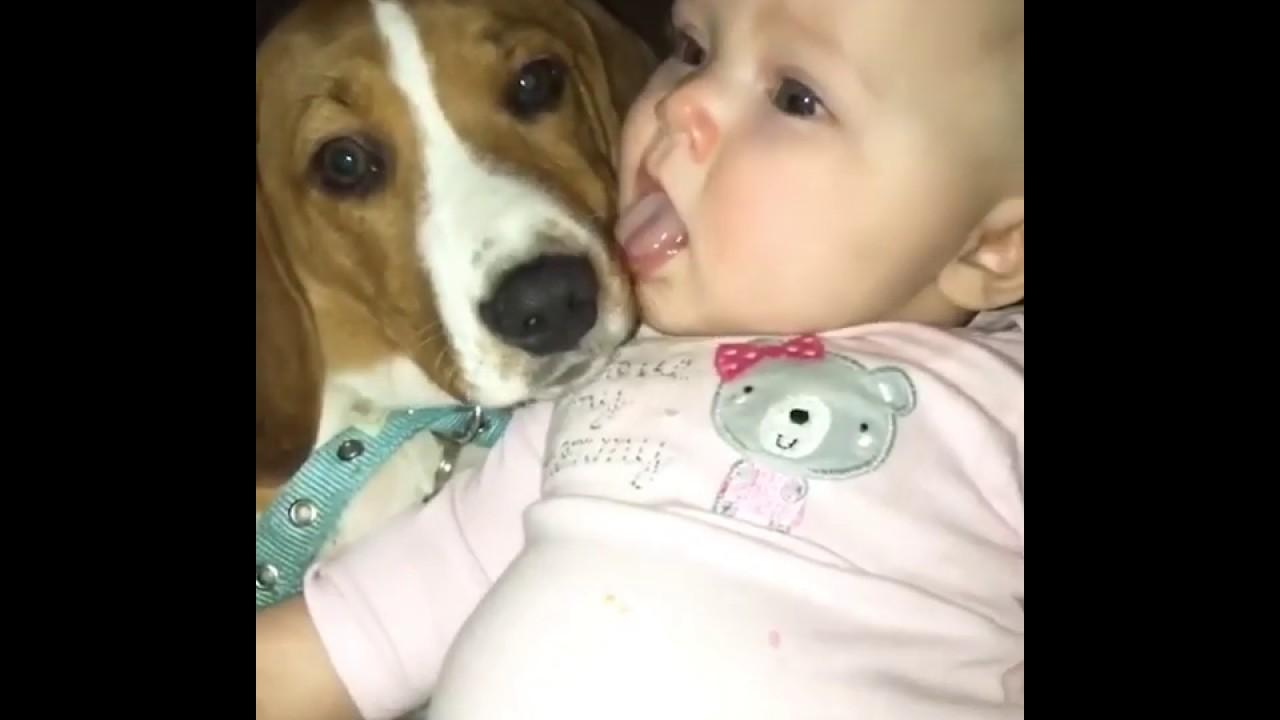 Cute Baby and Dog Lick each Other in the Mouth! #shorts
