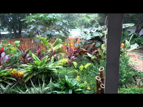 Organic Tropical Garden/Jungle