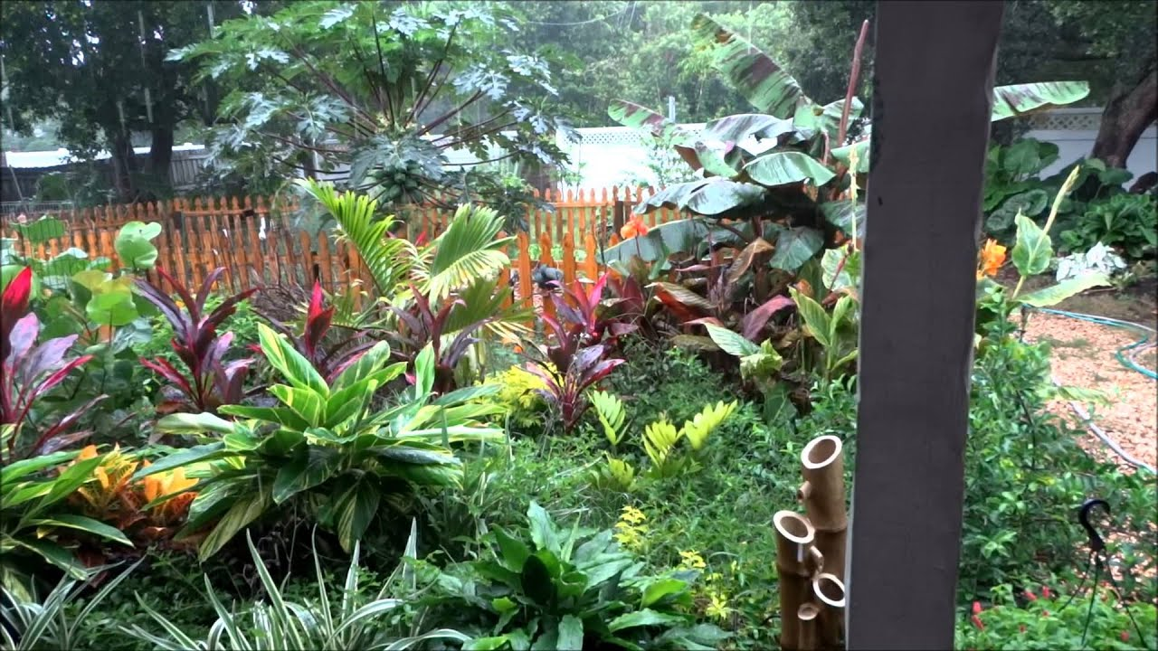 Organic tropical garden jungle youtube for Jungle garden design ideas