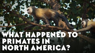 The First and Last North American Primates