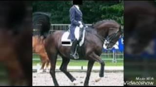 Ein Pferd erzählt : Rollkur