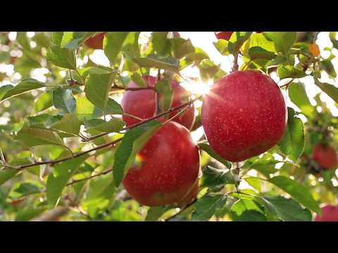 Discover Farmbox - Organic Fruits & veg in UAE - 2