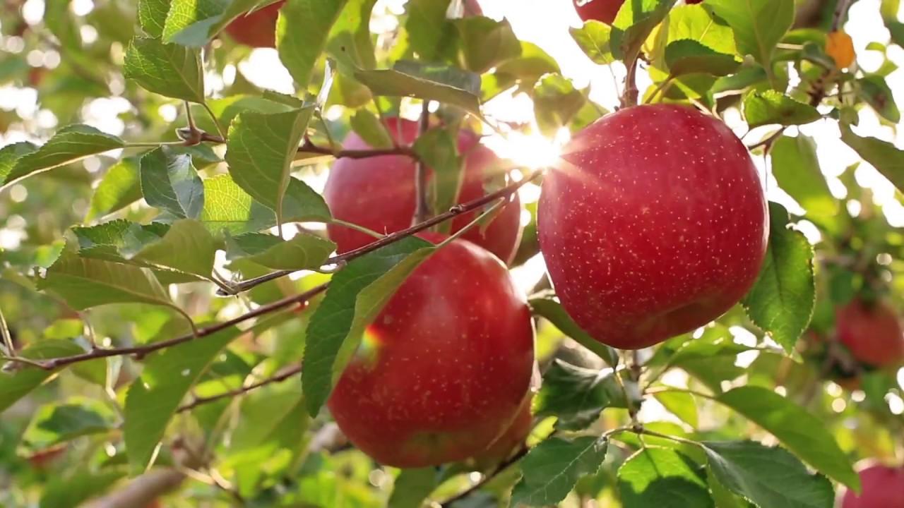 Farmbox Organic Vegetables UAE | FarmBox ae