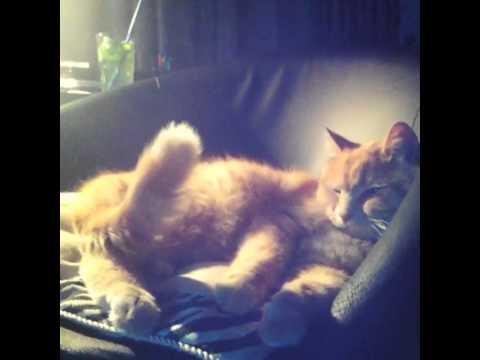 Кот трясет попой