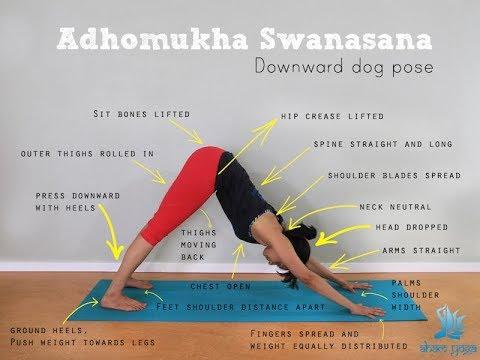 downward facing dogs  yoga pose tutorialaham yoga