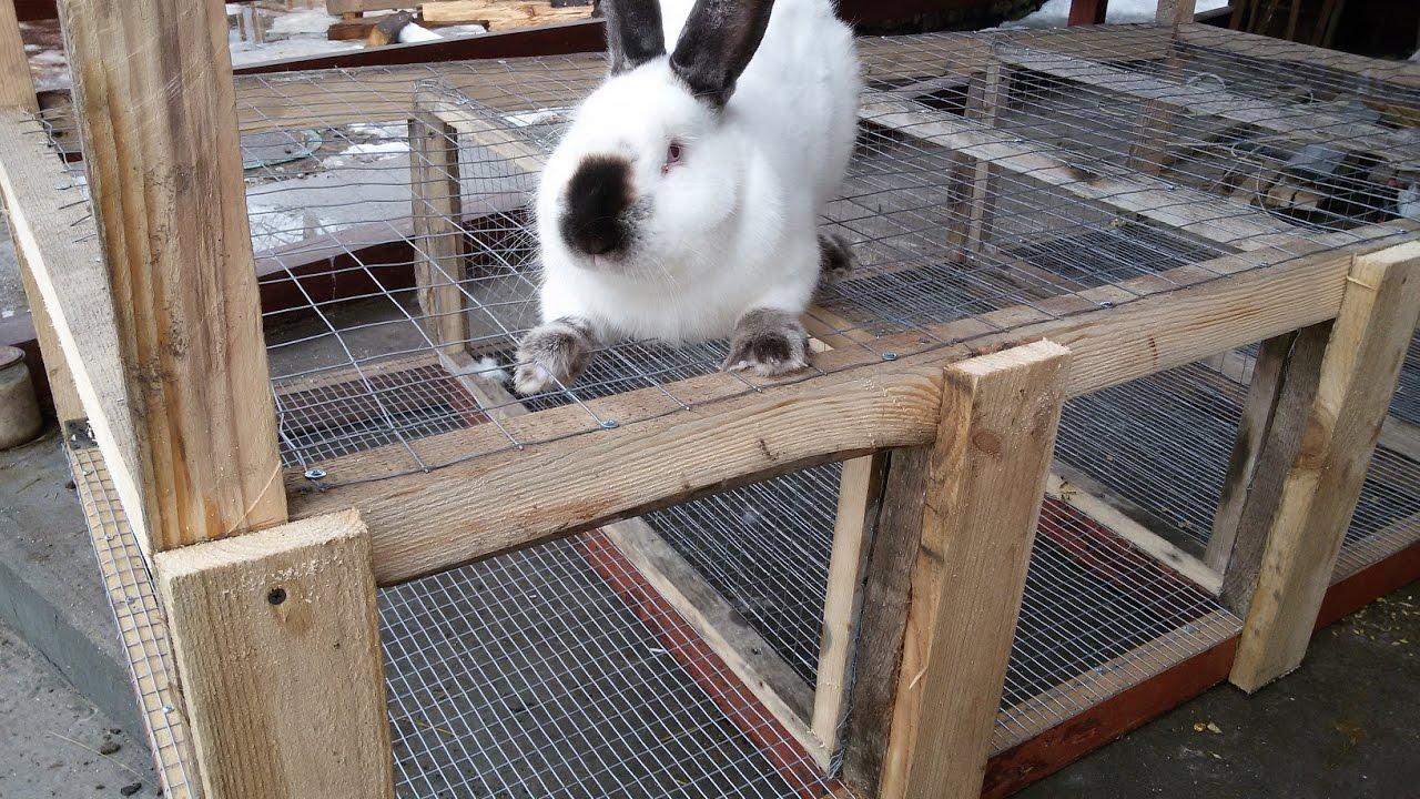 Клетки для кроликов с маточниками своими руками фото 365