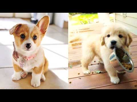 Baby Dogs  Cute and Funny Dog Videos Compilation #25 | Aww Animals