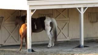 Pony Vs Draft