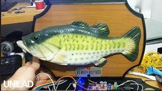 Billy Bass Making Animal Sounds | UNILAD