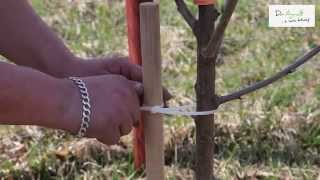 Jak posadzić drzewko owocowe ? Dr Agro - z nami łatwiej!