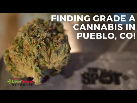 Dispensary Highlight - The Spot in Pueblo West, CO