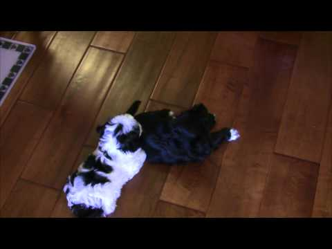 episode-1:-feeding-time-강아지-밥먹이기-복종훈련