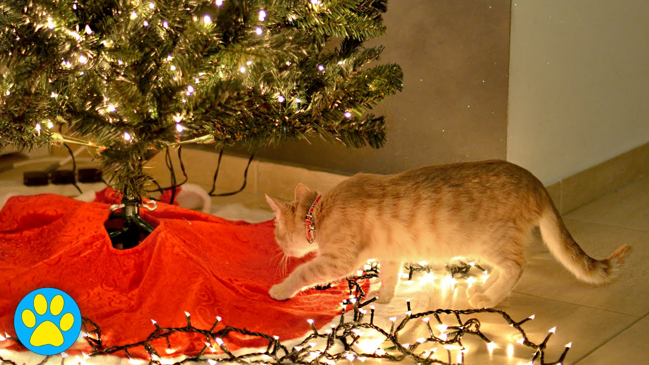 How To Cat Proof Your Christmas Tree.How To Cat Proof Your Tree For The Holidays