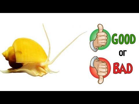 Aquarium Snails Good Or Bad? - The TRUTH REVEALED