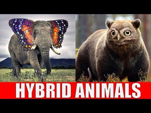 Animals That Don't Exist - Hybrid Animals