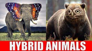 Animals That Dont Exist - Hybrid Animals YouTube Videos
