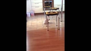 Что будет если прилепить кошке скотч к жопе