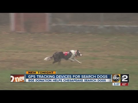 GPS collars for search dogs in Anne Arundel County