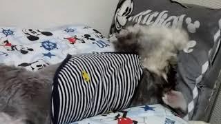 腕を鍛えます👊 枕でパンチング練習 thumbnail