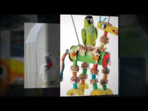 Parrot Toys.mp4