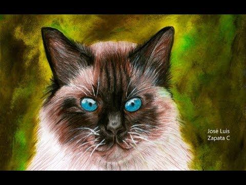 Dibujo de un gato siamés (cámara rápida) | Drawing a siamese cat