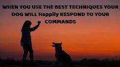Dog Training Longview  TX  - Dog Obedience Training Longview Texas