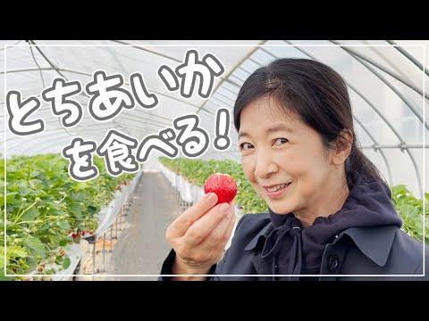 【VLOG】 栃木県へ仕事に行ったついでにいちご狩りと買い物を堪能♪