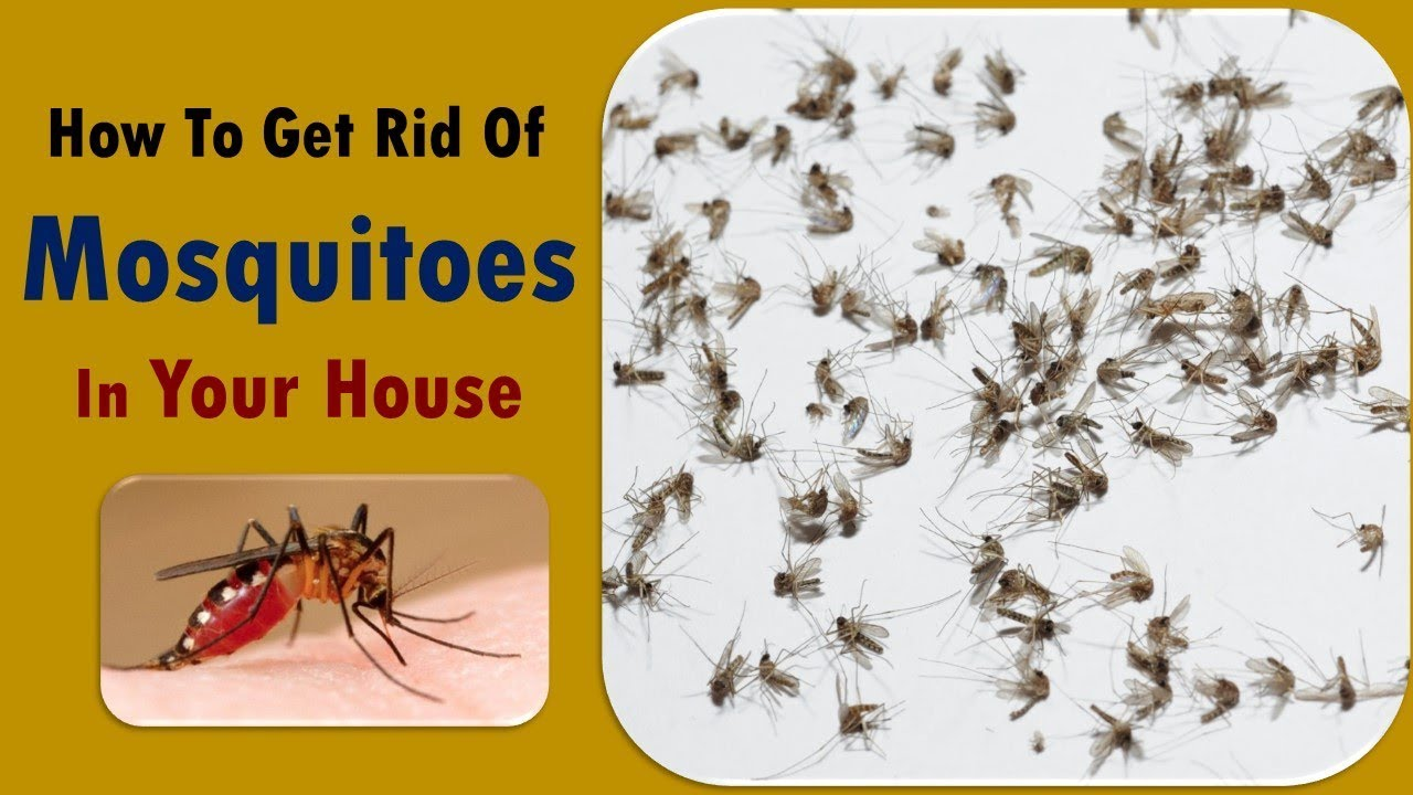 tricks get rid of mosquitoes without repellents - home ...
