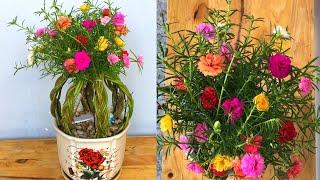 Gambar cover Bonsai hoa mười giờ kiểu hình cầu dễ thương