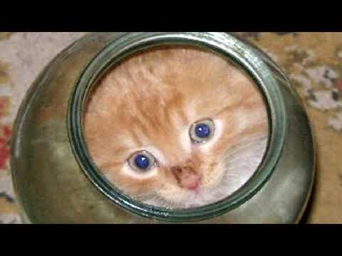 Котенок не мог вылезти из банки. Посмотри, что сделала мама-кошка… это надо видеть, невероятно